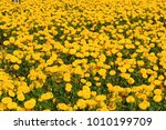 blurred summer background with... | Shutterstock . vector #1010199709