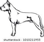pit bull terrier  pitbull | Shutterstock .eps vector #1010211955