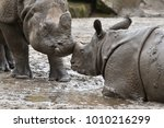 indian rhinoceros mother and a... | Shutterstock . vector #1010216299