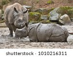 indian rhinoceros mother and a... | Shutterstock . vector #1010216311