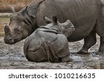 indian rhinoceros mother and a... | Shutterstock . vector #1010216635