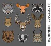 head of wild animals set ... | Shutterstock .eps vector #1010216764