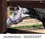 thoroughbred bay horse against... | Shutterstock . vector #1010222557