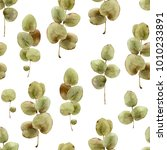 seamless herbal pattern with... | Shutterstock . vector #1010233891