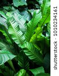 tropical green leaves pattern... | Shutterstock . vector #1010234161
