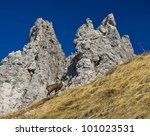 chamois in Alps mountain landscape - stock photo