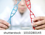 scientist analyse dna molecule... | Shutterstock . vector #1010280145