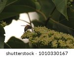 Bee Sitting On Flowers Of...