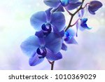Blue Orchid Flower Background