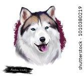 alaskan husky breed digital art ... | Shutterstock . vector #1010380219