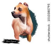 alano espa ol breed digital art ... | Shutterstock . vector #1010380795