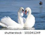 mute swan on water | Shutterstock . vector #101041249