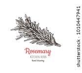 rosemary sketch style vector... | Shutterstock .eps vector #1010447941