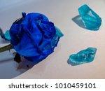 blue roses  tenderness  stones | Shutterstock . vector #1010459101