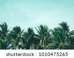 coconut palm trees  beautiful... | Shutterstock . vector #1010475265