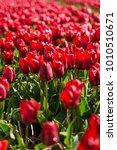 beautiful flowers field   Shutterstock . vector #1010510671