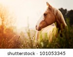 Stock photo paint mare at dusk in field 101053345