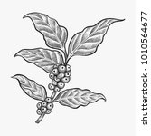 hand drawn coffee leaf vector   ... | Shutterstock .eps vector #1010564677