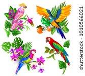 tropical bird set  parrot macaw ... | Shutterstock .eps vector #1010566021