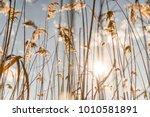 marmaris  mugla   turkey....   Shutterstock . vector #1010581891