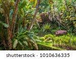 exposure done in the beautiful... | Shutterstock . vector #1010636335