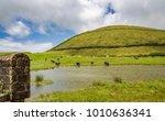 exposure done in the beautiful... | Shutterstock . vector #1010636341