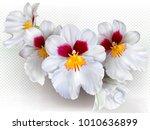 orchid flowers miltoniopsis... | Shutterstock .eps vector #1010636899