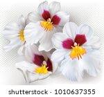 orchid flowers miltoniopsis... | Shutterstock .eps vector #1010637355
