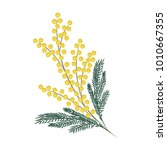 a branch of mimosa on a white...   Shutterstock . vector #1010667355