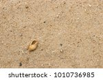 fossil shell on the sand beach  ... | Shutterstock . vector #1010736985