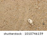 fossil shell on the sand beach  ... | Shutterstock . vector #1010746159
