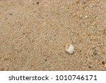 fossil shell on the sand beach  ...   Shutterstock . vector #1010746171