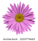 pink flower chamomile on a... | Shutterstock . vector #1010774665