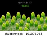 cactus isolated on the black... | Shutterstock . vector #101078065