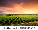 Small photo of Beautiful Vineyard in South Australia