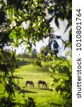 adelaide hills  south australia   Shutterstock . vector #1010801764