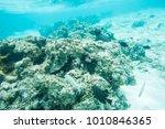 variety of wrasse  surgeonfish... | Shutterstock . vector #1010846365