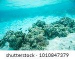 clown fish  surgeonfish  domino ... | Shutterstock . vector #1010847379