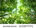 green forest. tree with green... | Shutterstock . vector #1010879791
