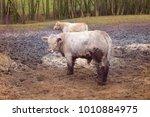 animal husbandry  natural...   Shutterstock . vector #1010884975