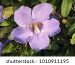 the flower in garden   Shutterstock . vector #1010911195