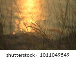 cozy grasses at sunset and sea | Shutterstock . vector #1011049549