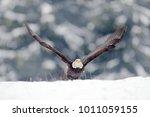 eagle star. bald eagle ... | Shutterstock . vector #1011059155