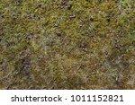 moss and grass background   Shutterstock . vector #1011152821