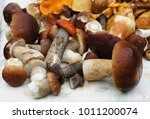 mushrooms porcini in the wicker ... | Shutterstock . vector #1011200074