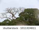live and dead tree in the grass.... | Shutterstock . vector #1011324811