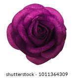 Stock photo purple rose isolated on the white background with clipping path 1011364309