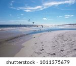 sea gulls at gulf shores ... | Shutterstock . vector #1011375679
