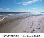 sea gulls at gulf shores ... | Shutterstock . vector #1011375685
