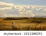 lion in african savannah at... | Shutterstock . vector #1011388291